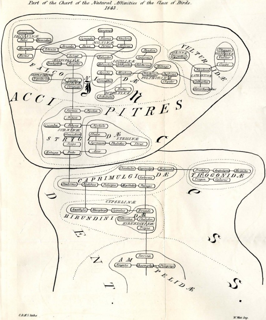 Copy of the top portion of the Strickland chart, published in Jardine 1858.