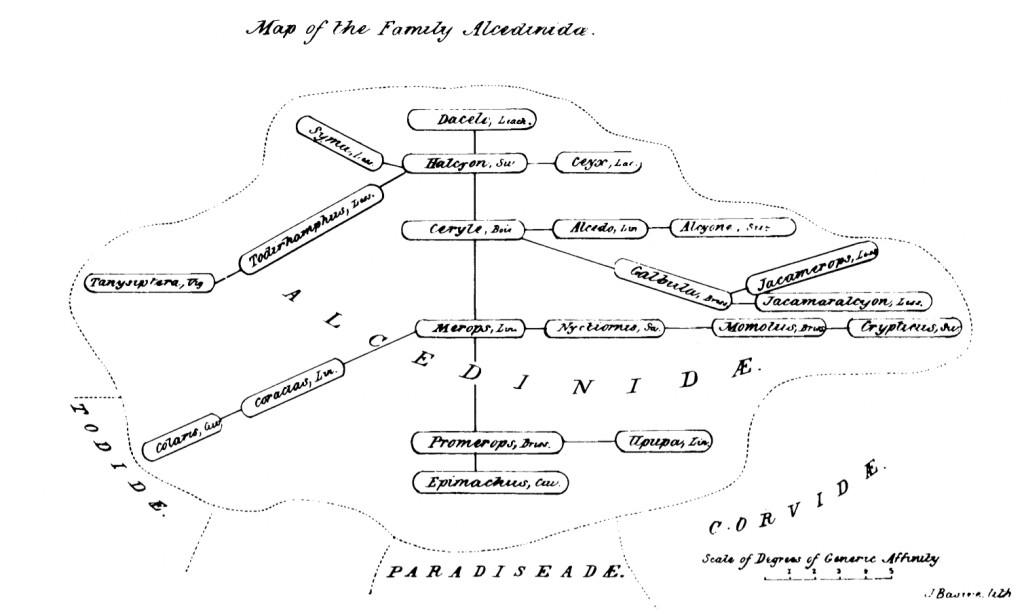 "Strickland's ""map"" of the affinities of the kingfisher family Alcedinidae, shown at the 1840 meeting of the British Association for the Advancement of Science in Glasgow, and published in 1841."